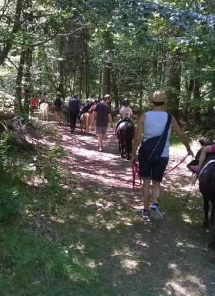 La forêt à poney