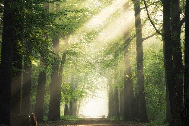 Bain de forêt au milieu des arbres remarquables