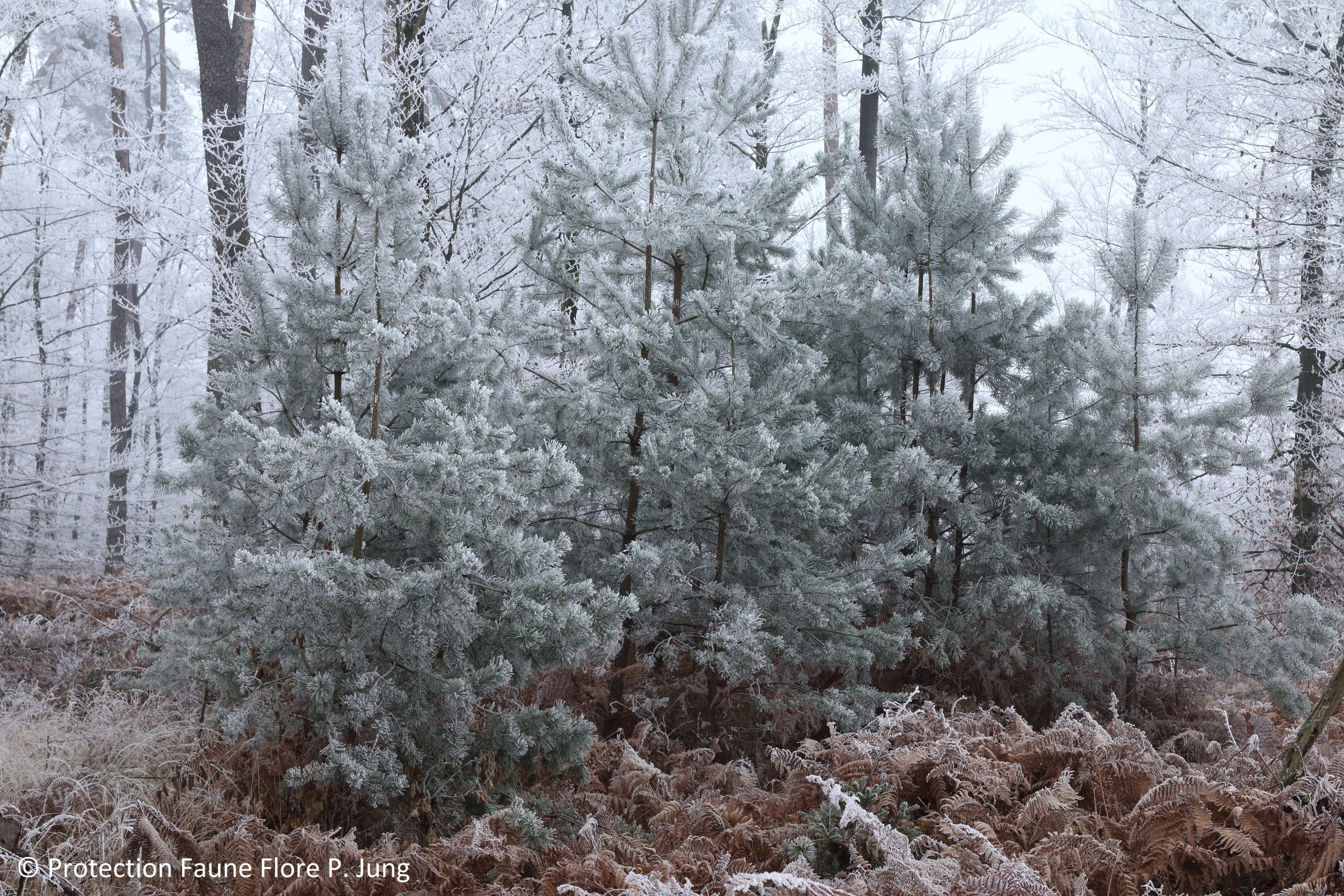 L'arrivée de l'hiver en forêt
