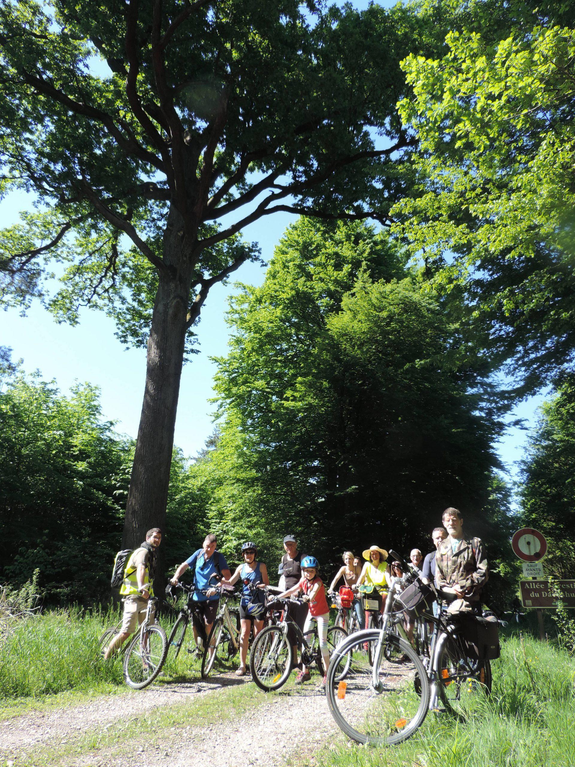 Sur la piste des arbres remarquables – balade à vélo